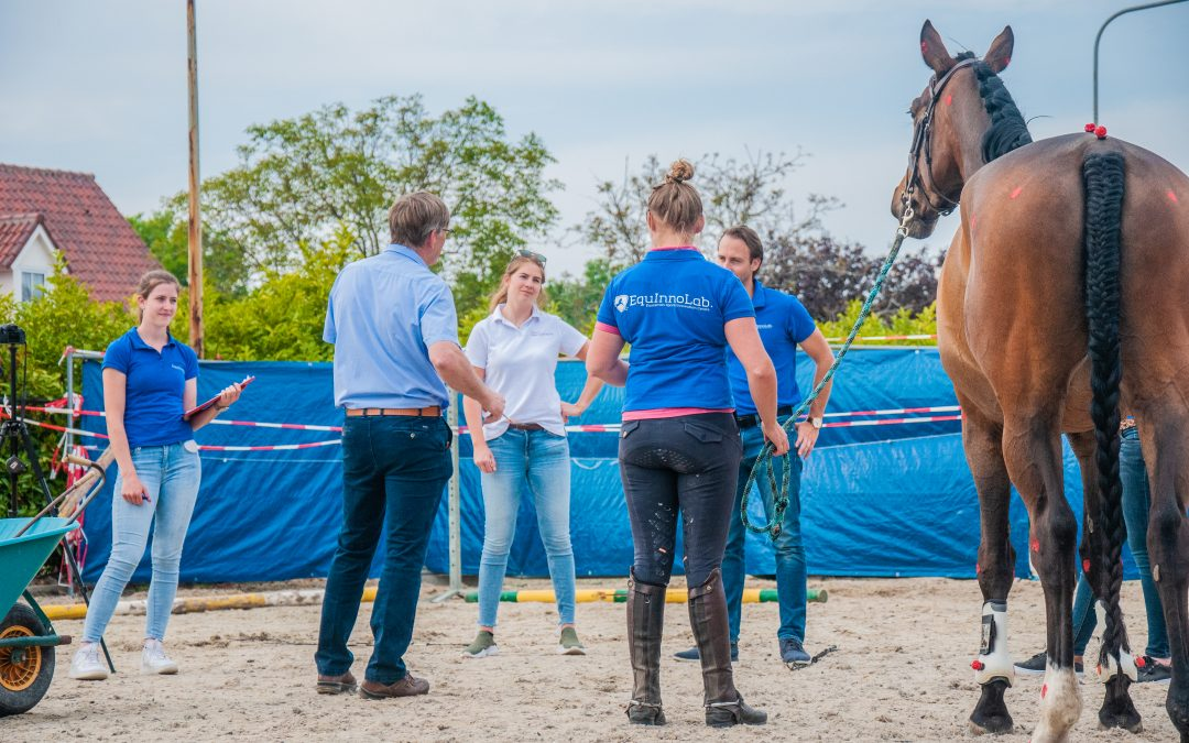 Evaluating the practical side of scoring horses with the EquInnoLab. MOTION system